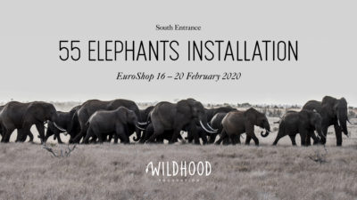 A herd of elephants roams the savannah
