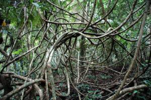 Durchblick im Steuer-Dschungel