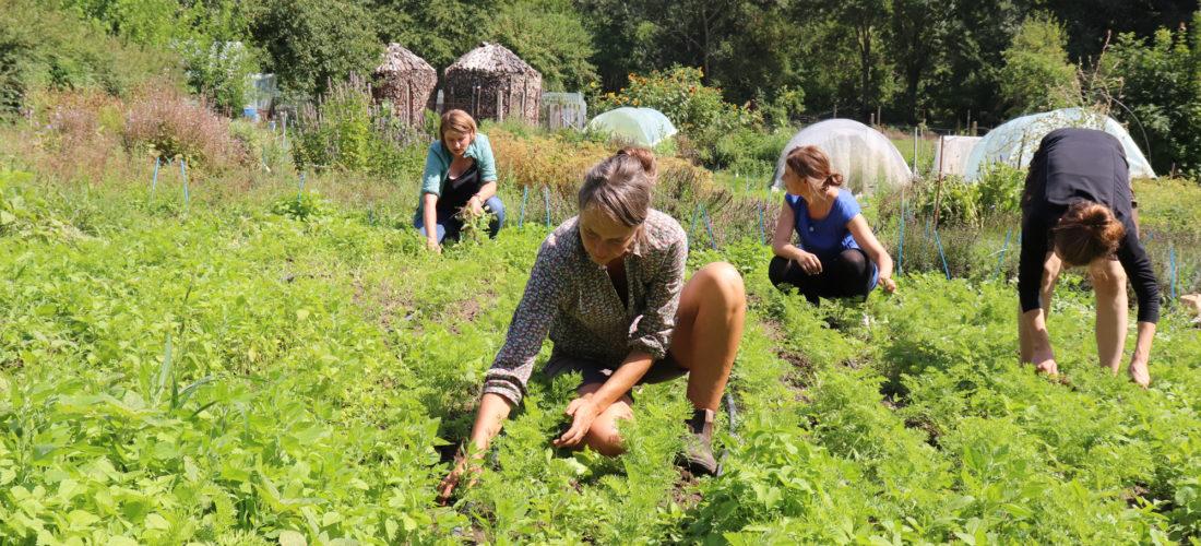 Botschafter der Vielfalt: Vergessene Gemüsesorten bereichern ab Juni in Berlin Anbau und Ladenregale