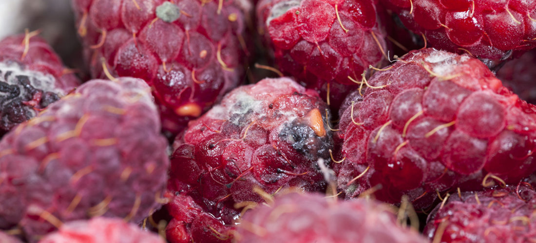 Food freshness sensors could replace 'use-by' dates