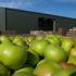 Grüne Äpfel vor einem Lagerhaus; copyright: panthermedia.net/merial